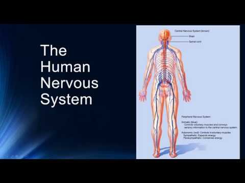 Vertebrate Nervous System: Part 1