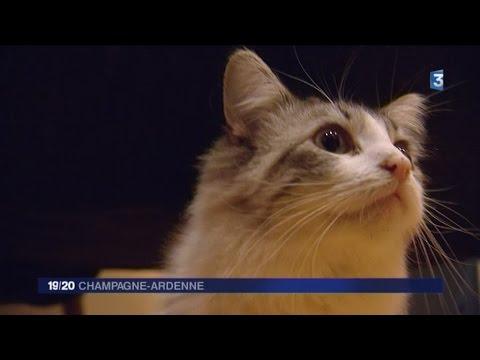 Le Darwin, bar à chats à Troyes