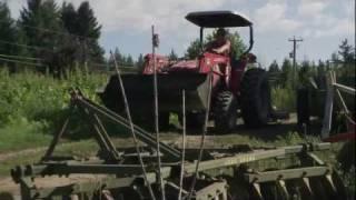 Rise & Shine on Alderlea Farm