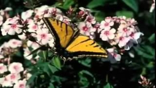 Kupu kupu kemana engkau terbang   kupu kupu yang lucu   LAGU ANAK INDONESIA   YouTube