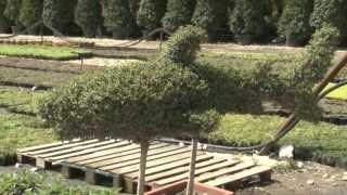 Растения в олимпийском питомнике прошли адаптацию (Сочи, Олимпстрой)