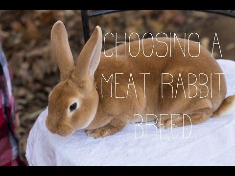 Choosing a Meat Rabbit Breed