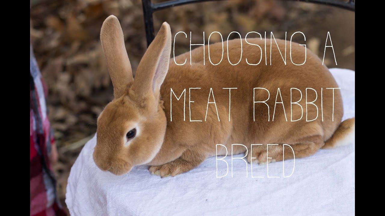 Choosing a Meat Rabbit Breed - YouTube