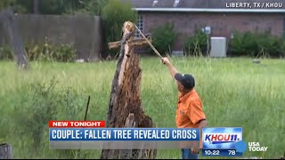 Cross and Jesus appear in downed tree, family says
