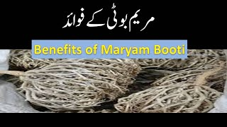 How To Use Maryam Booti (Maryam Ka Phool) For Delivery & Labour Pain -- مریم کے پھول کے فائدے