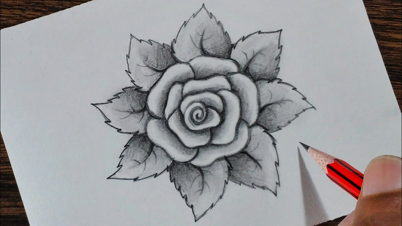 How to draw a Rose step by step - YouTube