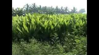 Taking Roots: Sustainable Agriculture in India