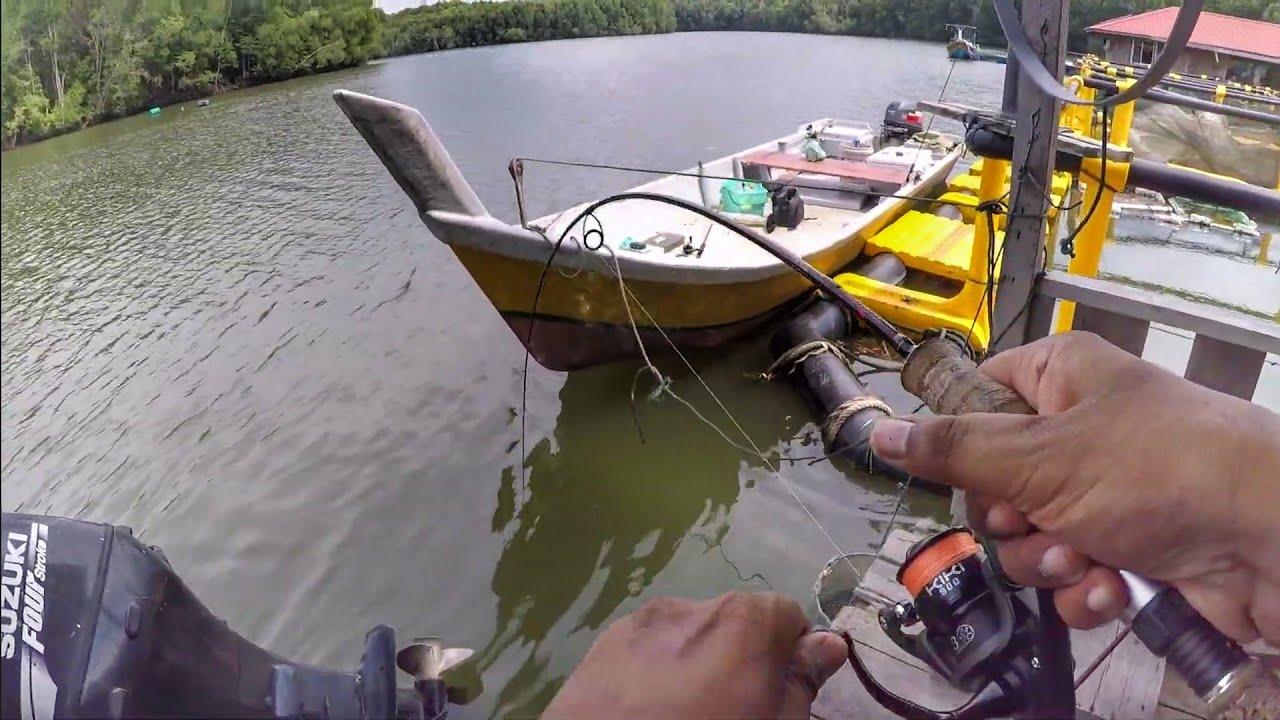 Download Trip Sungai Merbok Mencari SIAKAP! Barramundi Hunting!