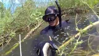 Spearfishing Snakehead  fish ,ดำน้ำยิงปลาชะโด