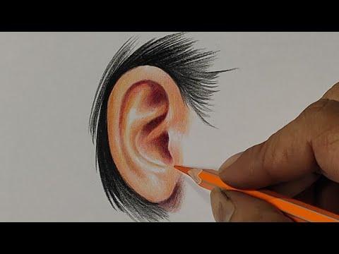 Drawing Ear With Colour Pencil / Live Art Chennai