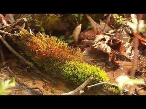 W&M Tiny Nature #1