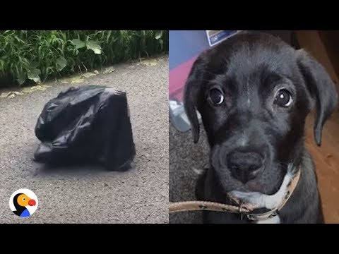 Puppy Left in Trash Bag in the MIDDLE OF THE ROAD UPDATE | The Dodo