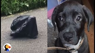 Puppy Left in Trash Bag in the MIDDLE OF THE ROAD UPDATE   The Dodo