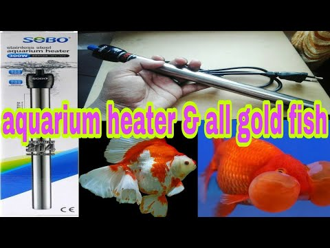 Aquarium Temperature Without Retaining Heater