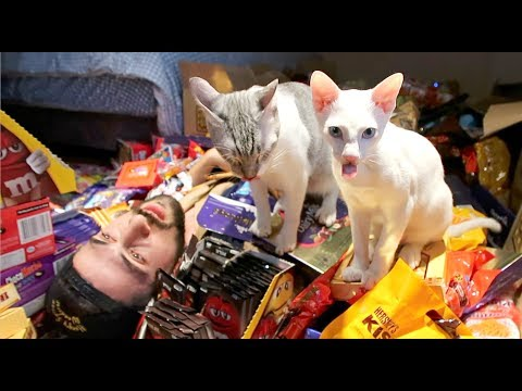 "🎃 Packing LOTS Of CHOCOLATES For ""TRICK Or TREATS"" With My CATS 🎃"