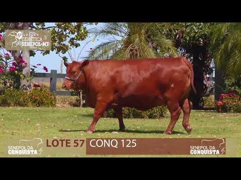 LOTE 57 CONQ 125