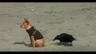Самые СМЕШНЫЕ Приколы ЖИВОТНЫХ !  The most FUNNY Jokes ANIMALS !