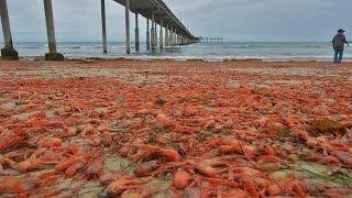 Fukushima Update-Massive Sea Creatures die-off countinues on California Coast