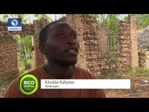 Eco@Africa: Focus On The Role Of Local Communities In Combatting Climate Change