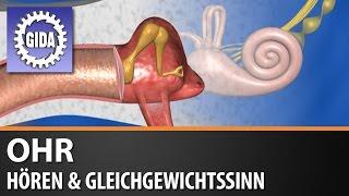 GIDA - Ohr - Hören & Gleichgewichtssinn - Biologie - Schulfilm - DVD (Trailer)