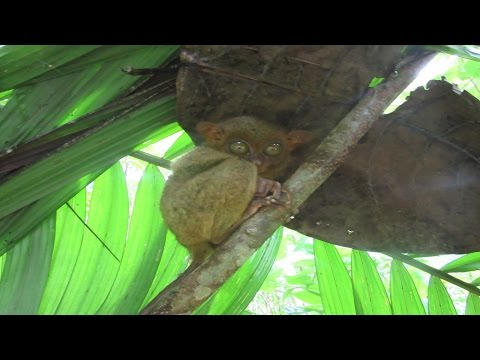 Vlog #4 - Philippinen Bohol - Dorfleben, Butterflyfarm, Tarsier, Floßfahrt und mehr