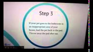 How To House Potty Train Your Dog Indoors Using Puppy Training Pee Pads