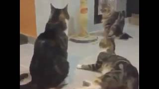 Funny Cats getting scared by Spongebob song