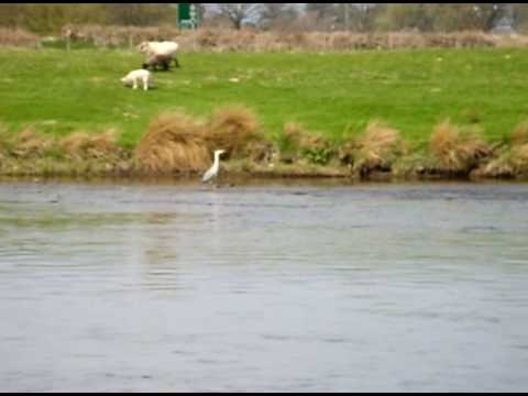 FISHING ON THE RIVER WYE.....AVI