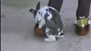 animals sex funny :) سكس حيوانات