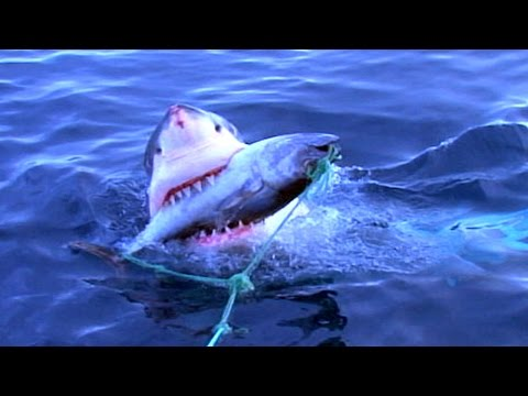 Dallas PD tribute and Crazy Shark Fishing! DMFD