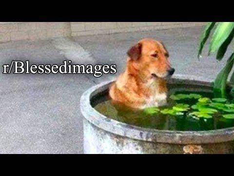 R/Blessedimages | SAD DOG