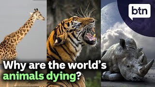 Why Are the World's Animals Dying?