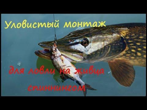 ПРОСТОЙ и УЛОВИСТЫЙ монтаж для ловли на живца спиннингом