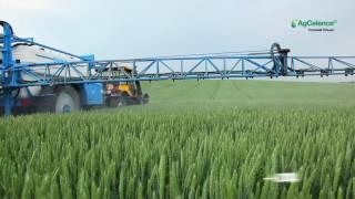 Фунгіциди для зернових компанії BASF