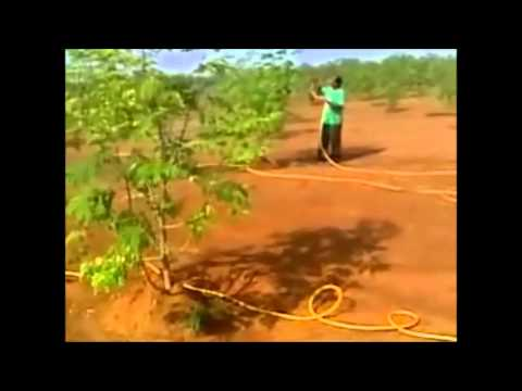 Savera Farms : Tractor mounted spraying systems for Moringa - Part 1