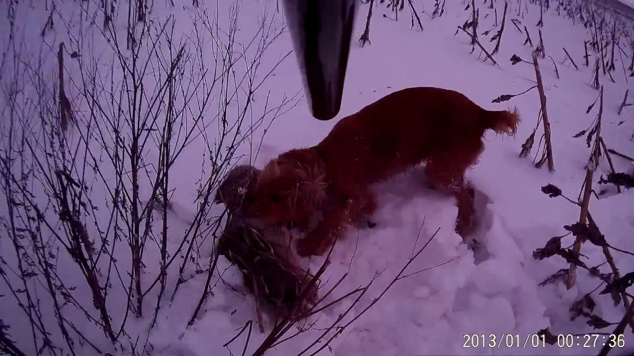 Замшевые сапоги зимние купить в украине