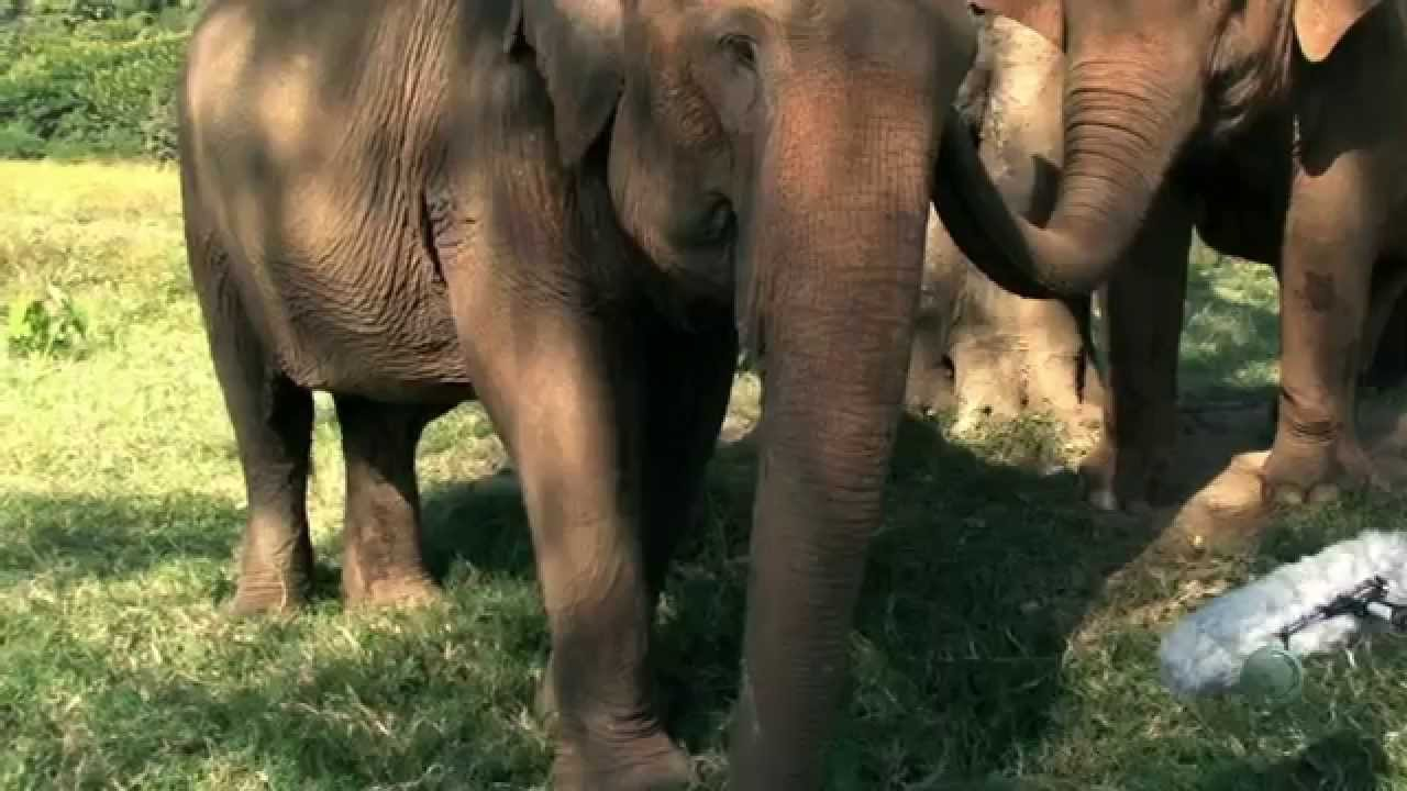 elefant hukommelse