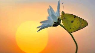 A-ha - Butterfly, butterfly