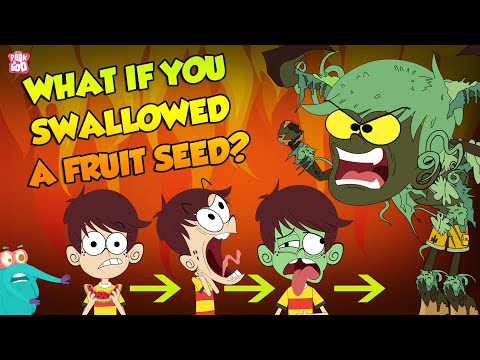 What If We Swallow A Fruit Seed?   Plant Growing In Stomach   The Dr Binocs Show   Peekaboo Kidz