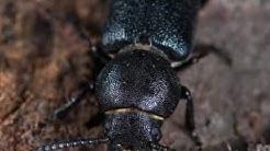 Organic Pest Control in Phoenix ~ Arizona Organic Pest & Termite Control ~ Exterminator