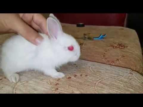 Muhabbet kuşu yeni japones ve tavşan