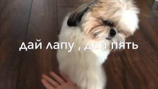 Стрижка Эдвина /команды/