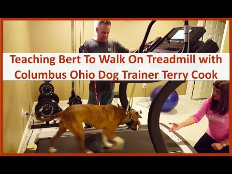 Dog Training in Columbus Ohio: Private Lessons with Dog Trainer Terry Cook: Dog Walking On Treadmill