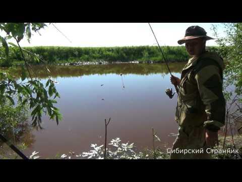 Рыбалка в Сибири. Сазан есть.