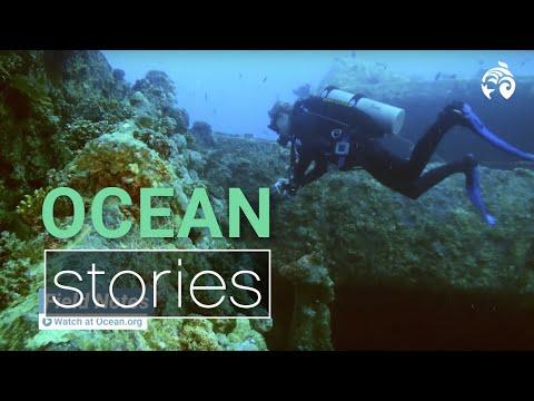 A Year of Ocean Stories | Ocean Wise