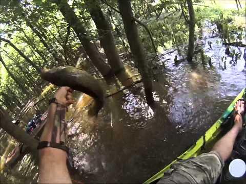 Kayak Bowfishing