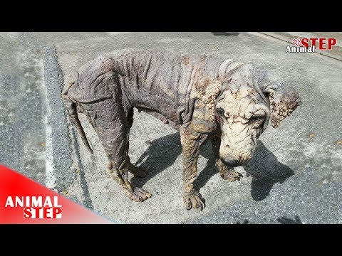 Stray Dog with Horrible Mange and Skin Infection Gets Amazing Makeover and Finally Adopted
