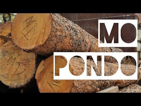 Mo Pondo - Black Forest Colorado Wildfire Mitigation