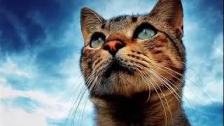 """""""Кошки с голубыми глазами #2"""""""