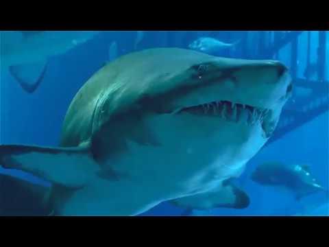 Dubai Aquarium дубайский аквариум и подводный зоопарк Vlog 8 Kolodin Tv Youtube
